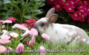 Spring Flower Show 2012