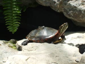 Turtle at Lamberton Conservatory