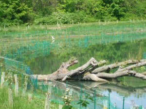 Beaver Island Wetlands