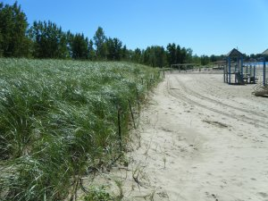 Woodlawn beach grass